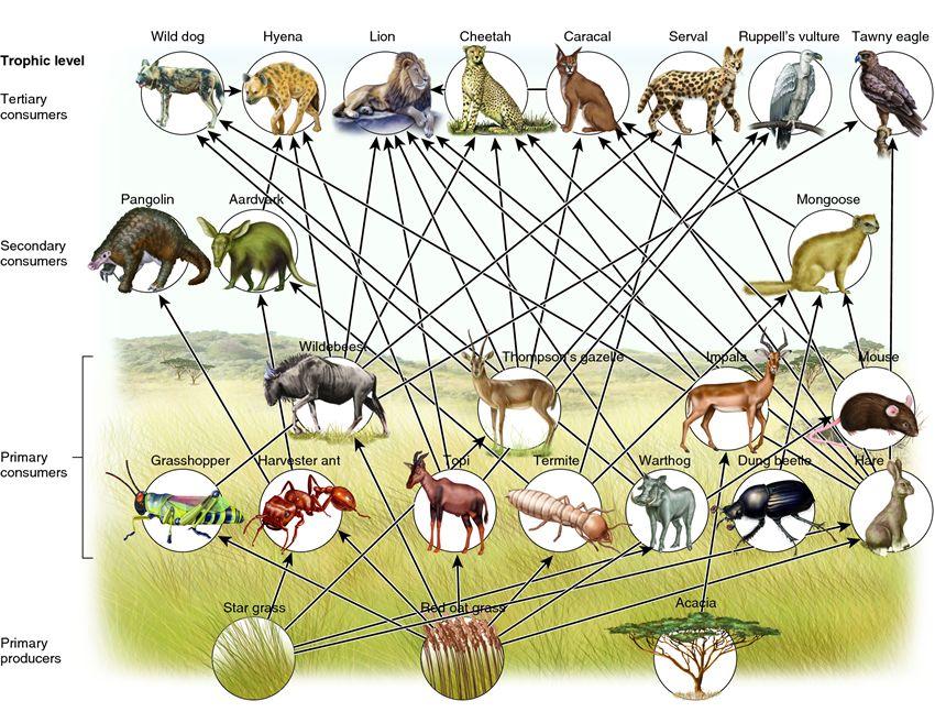 Food Chain & Food Web.