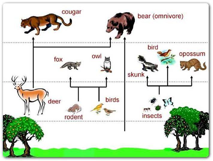 Food Web Pictures Diagram Clipart.