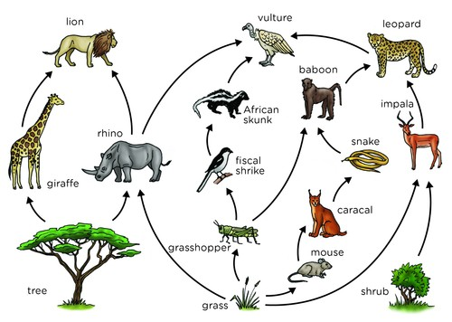 food web in africa clipart - Clipground