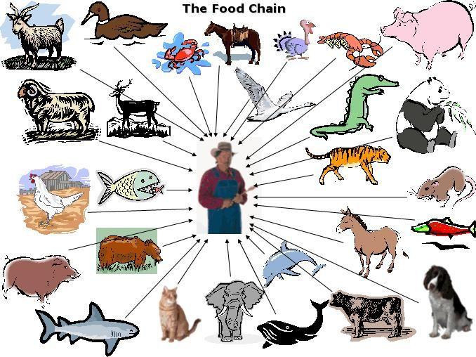 17 beste ideer om Food Chain Diagram på Pinterest.