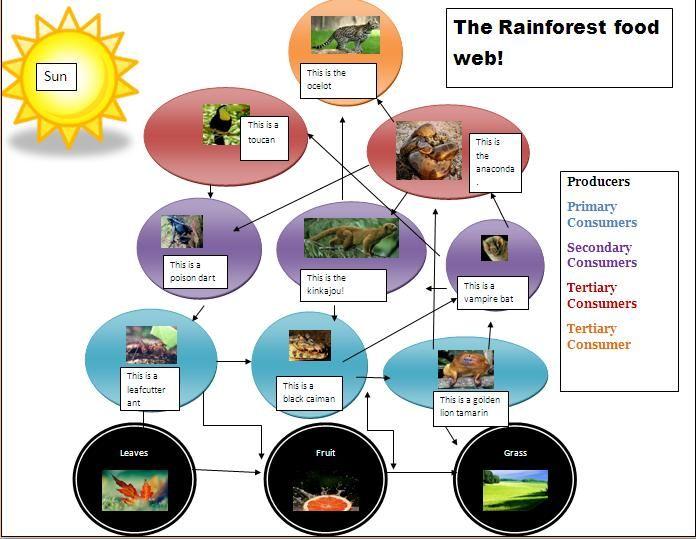 Tropical Rainforest Food Web Clipart.