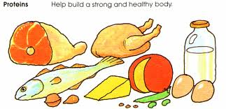 Protein Foods Clipart.