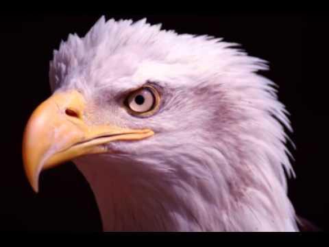 Eagle Facts.