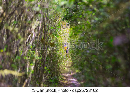 Stock Illustration of foot path in a magic forest csp25728162.