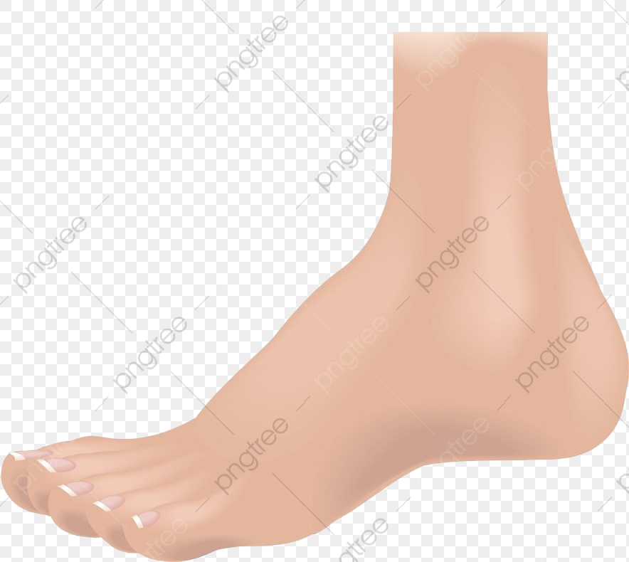 Left Foot Vector, Flesh Color, Foot, One Foot PNG Transparent Image.