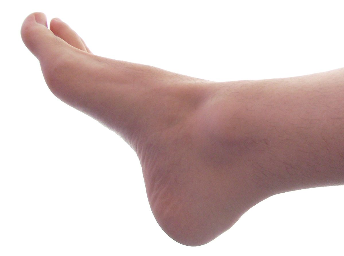 Foot Png (104+ images in Collection) Page 1.