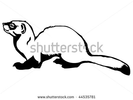 Black Footed Ferret Clipart.