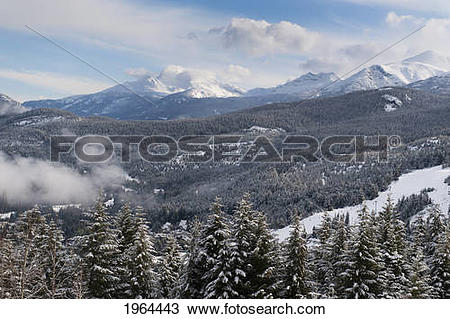 Stock Photo of snow covered trees in a forest in the foothills of.