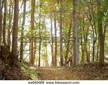 Stock Photograph of Forest path. Appalachian foothills, Southeast.
