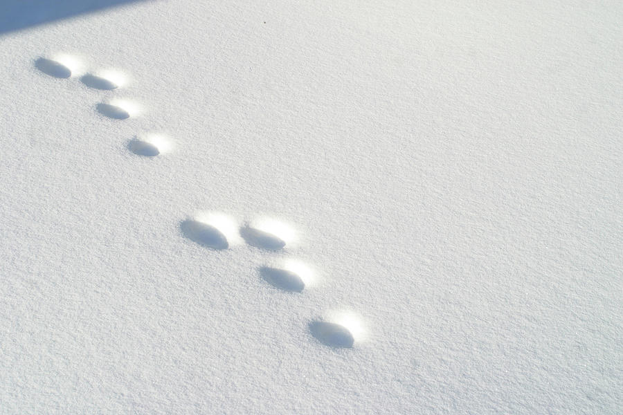 Free Bunny Footprints Cliparts, Download Free Clip Art, Free Clip.