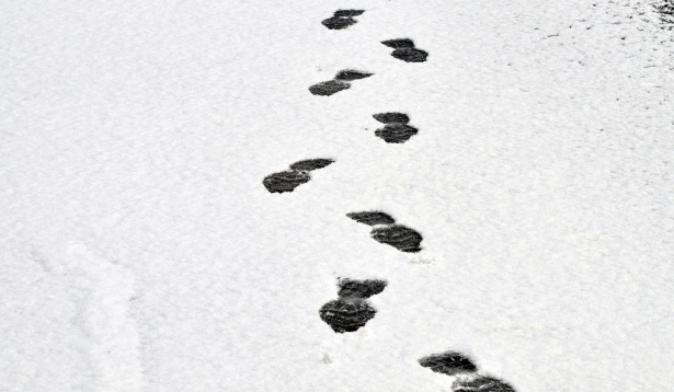 Footprints In The Snow Free Stock Photo.