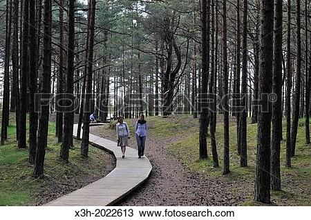 Stock Photo of footway through the coastal pine forest in Ragakapa.
