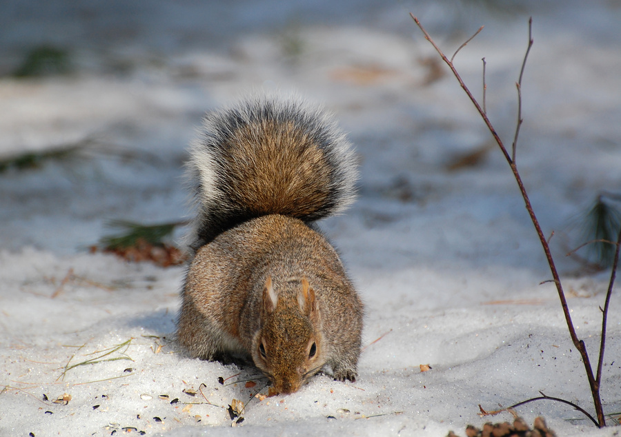 Suzanne Britton Nature Photography: Winter Forage.