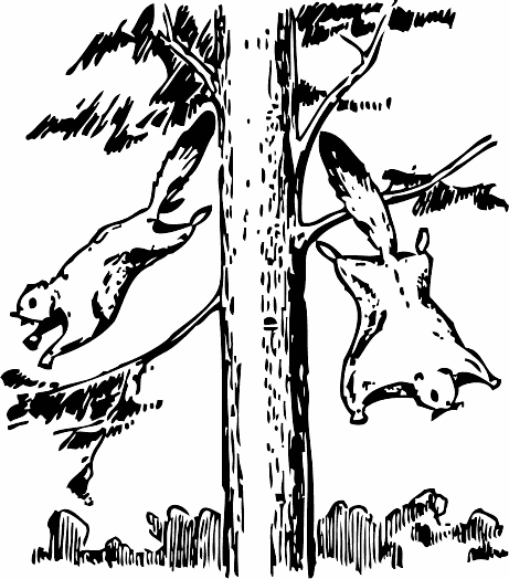 Free Squirrel Foraging Clipart, 1 page of Public Domain Clip Art.