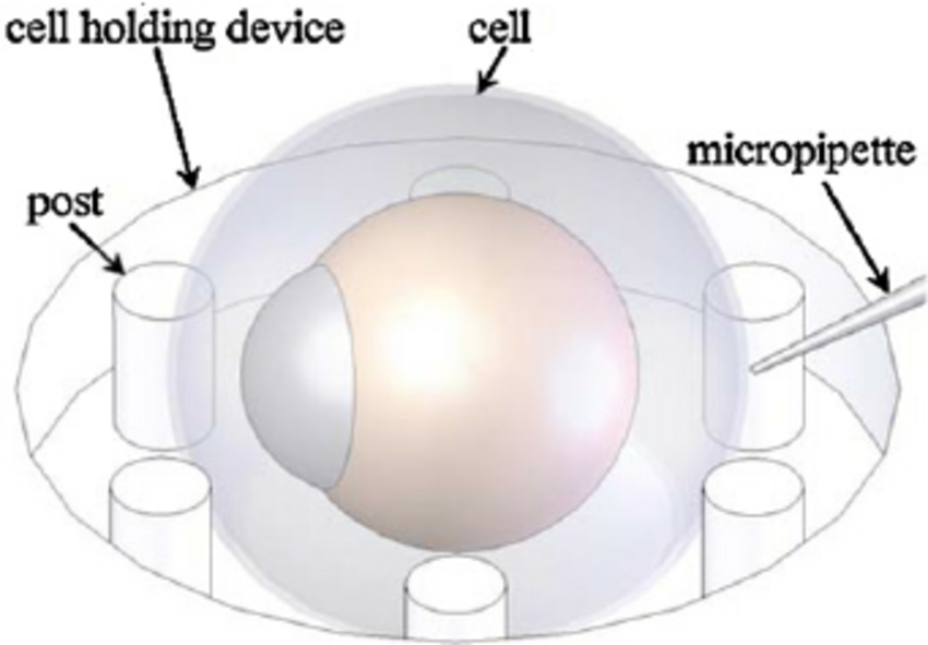 Schematic configuration of vision.