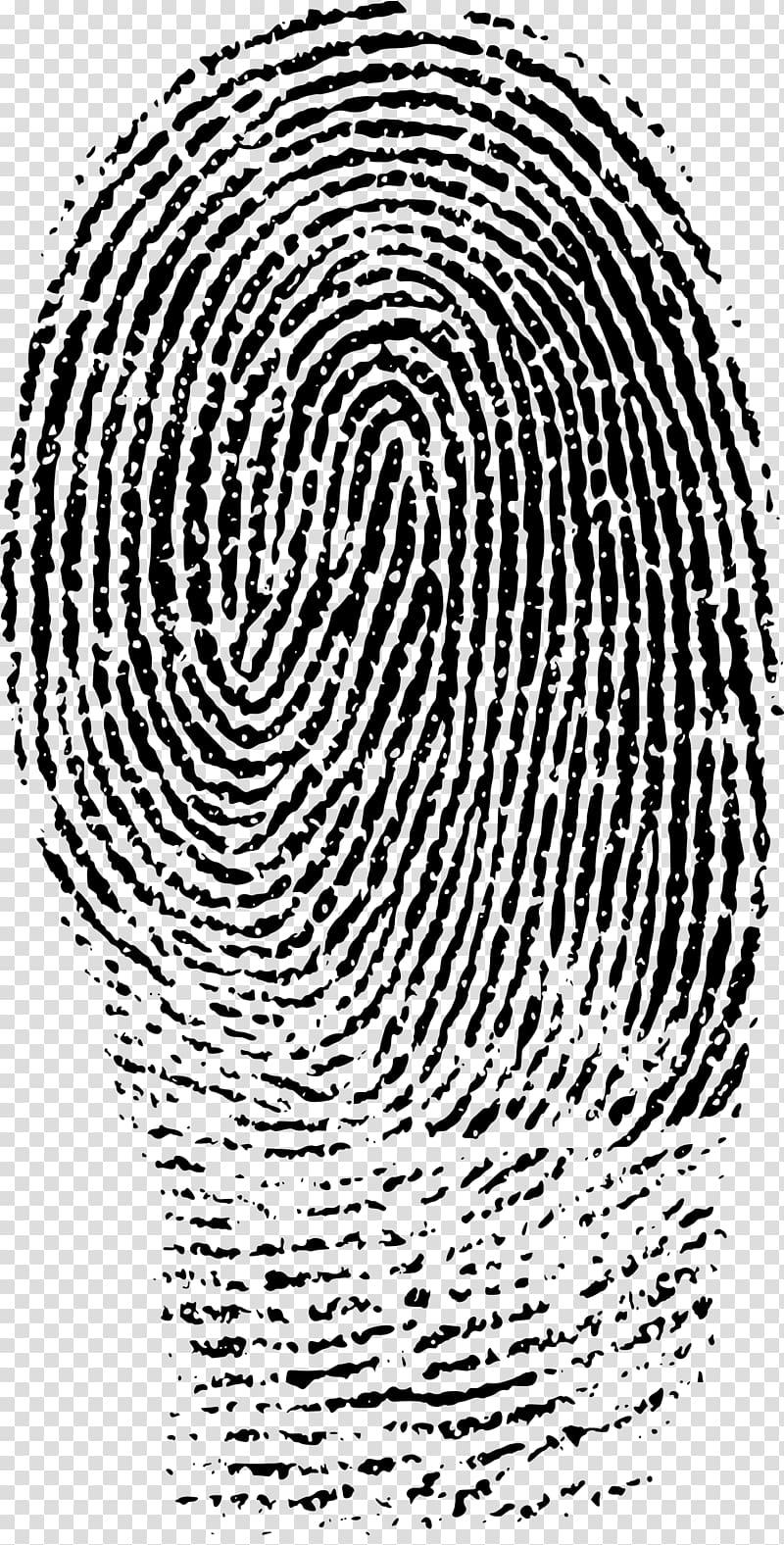 Fingerprint Evidence Forensic science Crime scene, finger print.