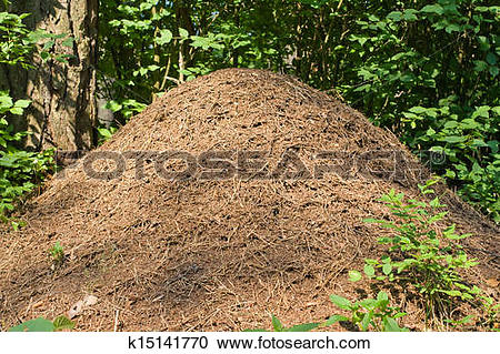 Stock Photography of Anthill in a forest k15141770.