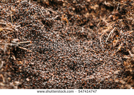 Anthill Stock Images, Royalty.