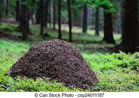 Pictures of ant hill.