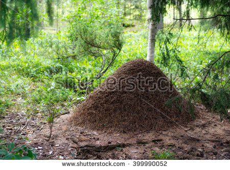 Anthill Stock Photos, Royalty.