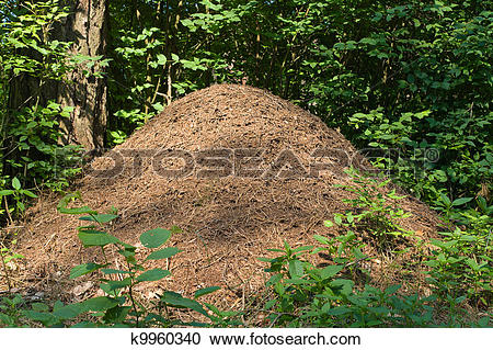 Stock Photography of Anthill in a forest k9960340.