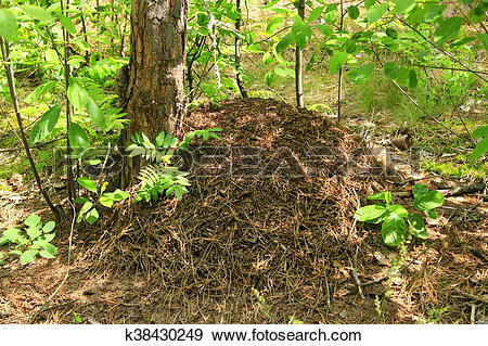 Stock Photograph of big ant hill in the forest k38430249.