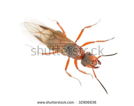 Queen Ant Stock Images, Royalty.