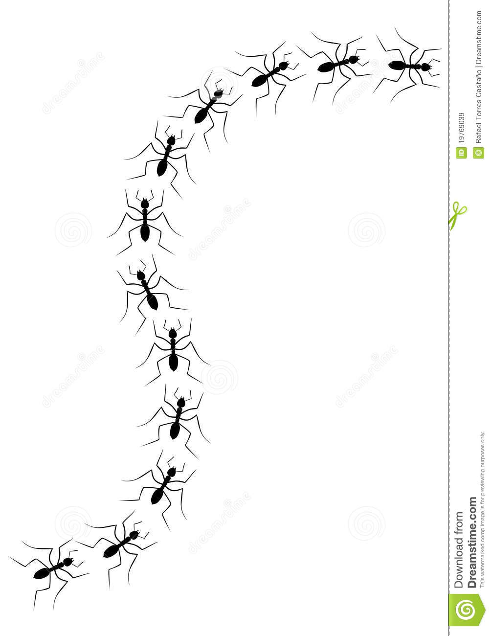 Ants In A Line Forest.