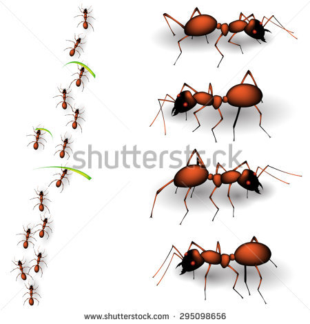 Ants Isolated Stock Photos, Royalty.