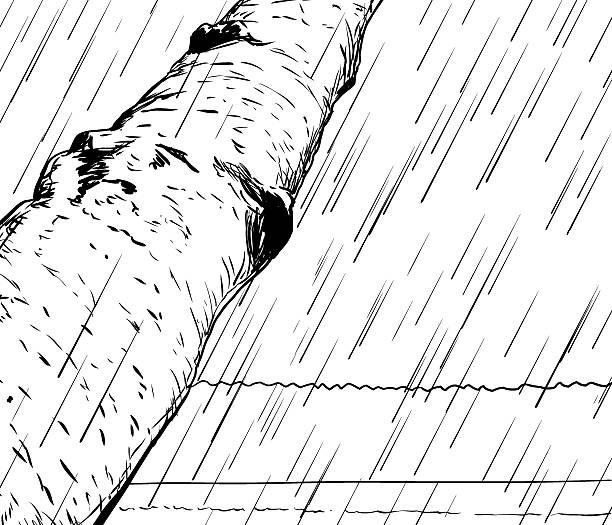 Swedish Forest Background Outline Clip Art, Vector Images.