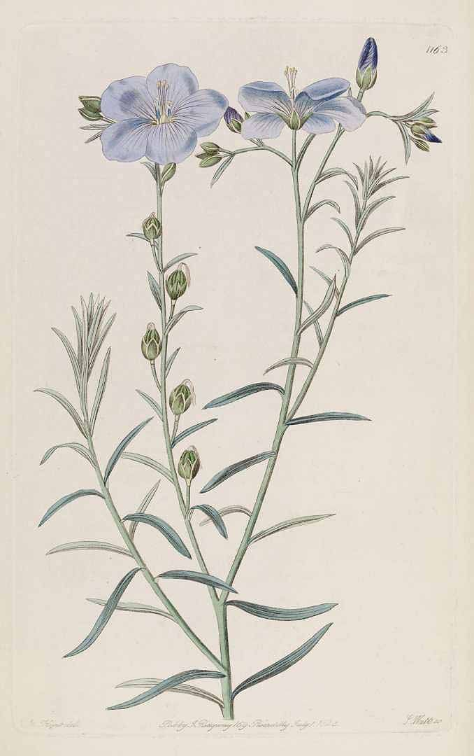 1000+ images about Botanical prints & Drawings on Pinterest.