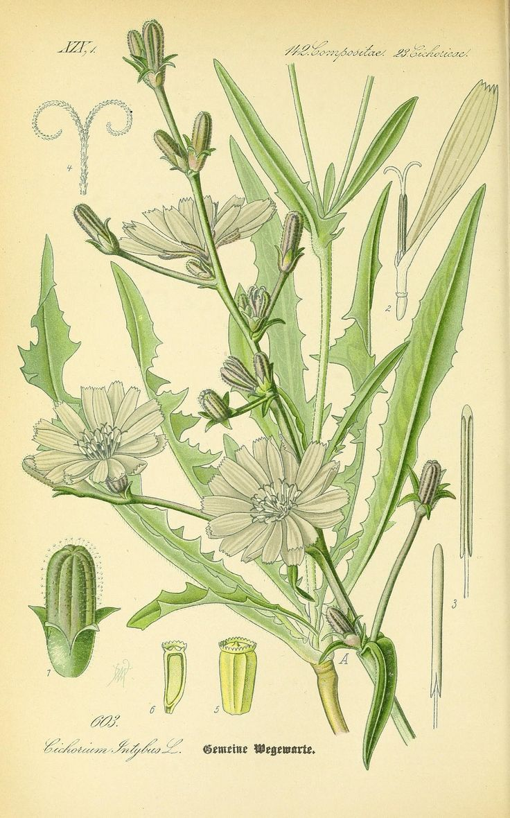 1000+ images about botanicals flowers on Pinterest.