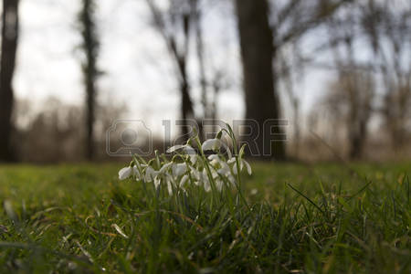 Forest Bells Images, Stock Pictures, Royalty Free Forest Bells.