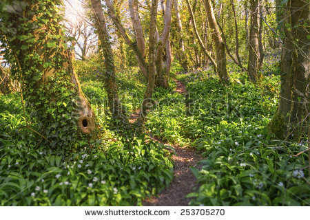 Forest Bells Stock Photos, Images, & Pictures.