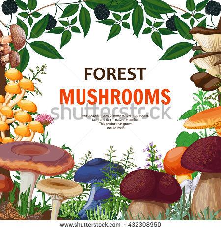 Field Mushroom Stock Vectors, Images & Vector Art.