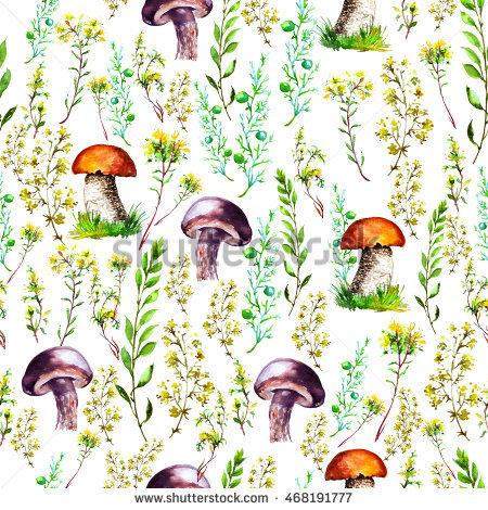 Meadow Mushroom Stock Photos, Royalty.