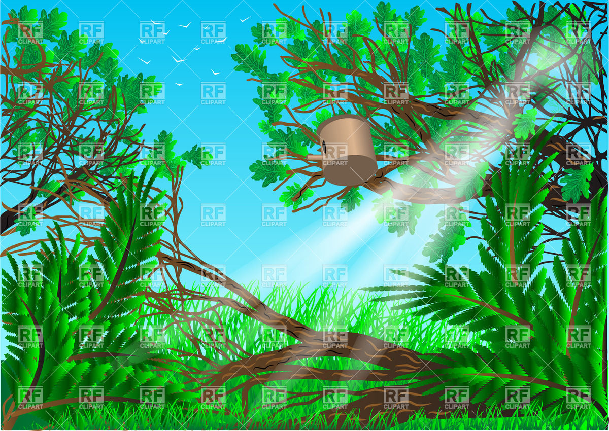 Summer forest background with trees and grass Stock Vector Image.