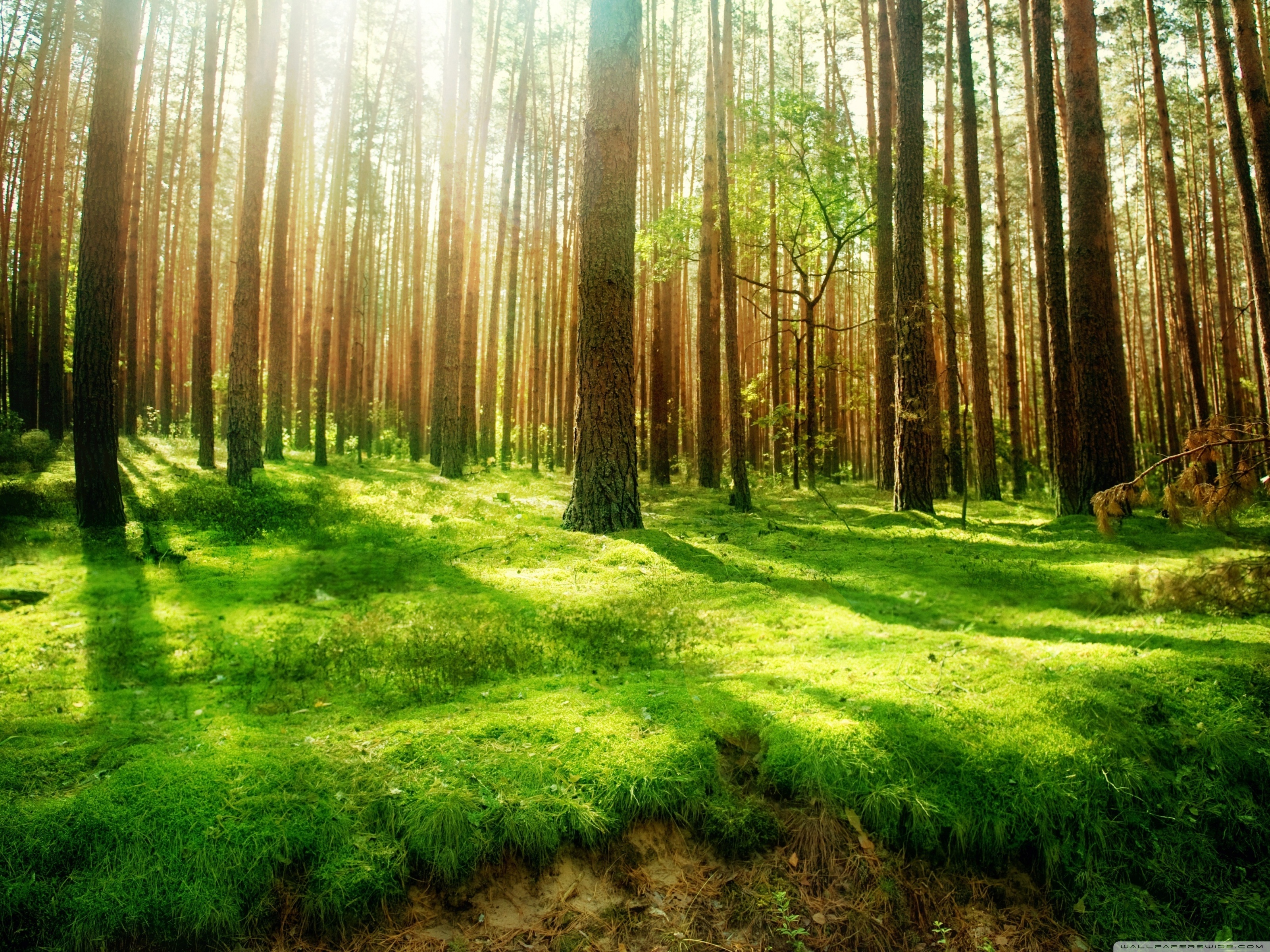Forest Clipart Backgrounds Free.