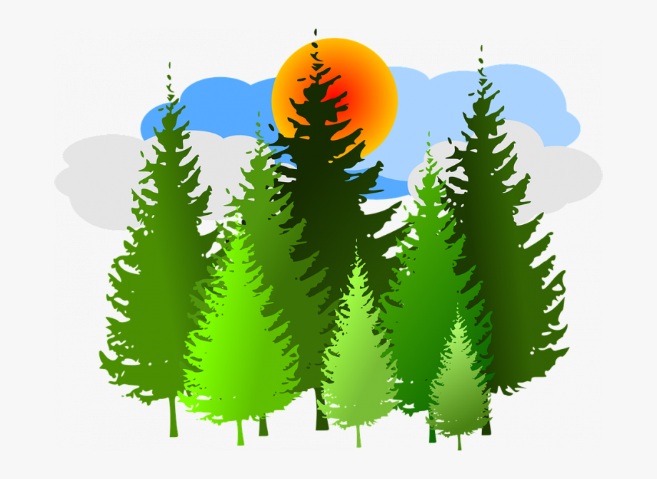 Forest Clipart Free Spruce Forest Conifer Free Vector.