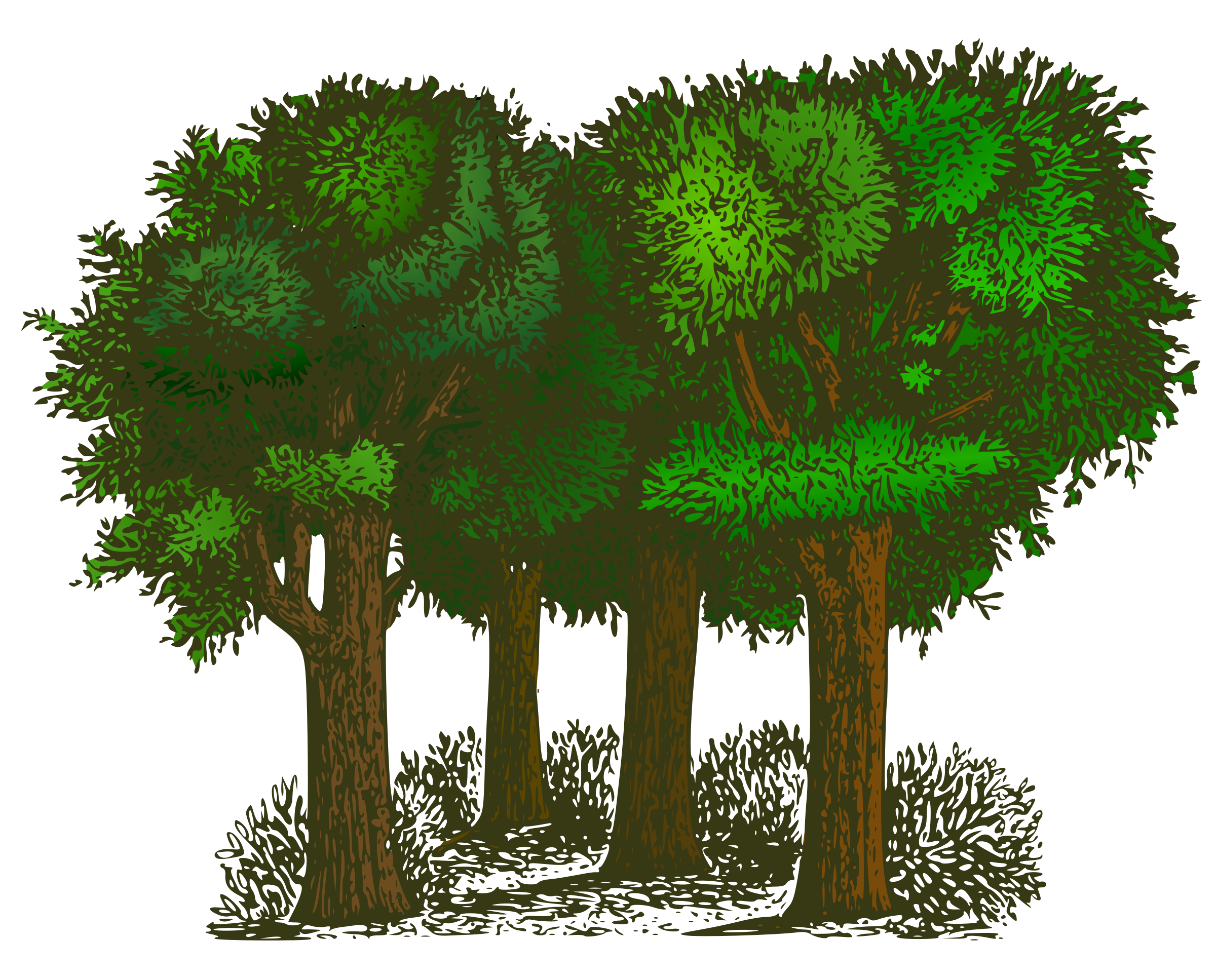 Showing post & media for Forest clip art flyer.