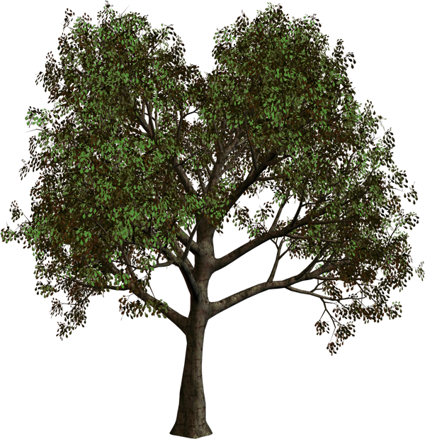 Forest Tree PNG Clipart.