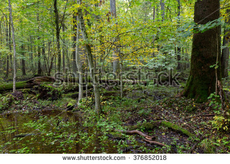 Natural Deciduous Forest Sweden These Forests Stock Photo.