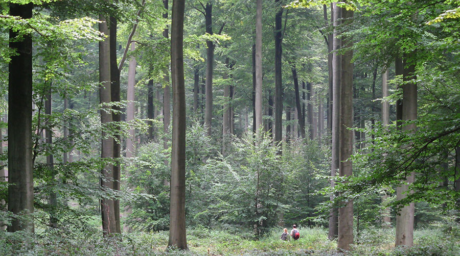 Forest Diversity Loss Will Drive Productivity Decline, Study Shows.