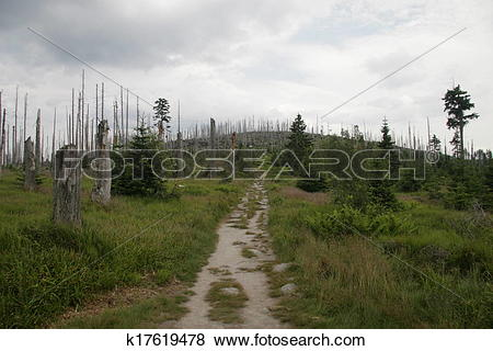 Pictures of forest decline k17619478.
