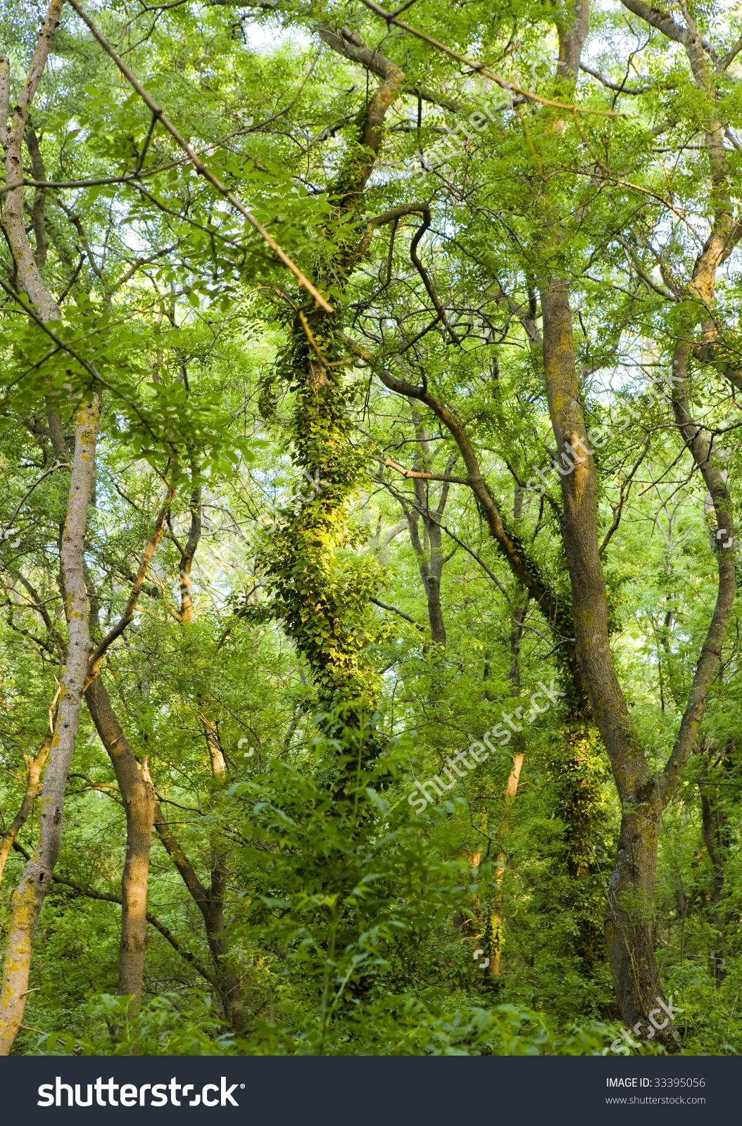 Bulgaria Forest Reserve City Albena On Stock Photo 33395056.
