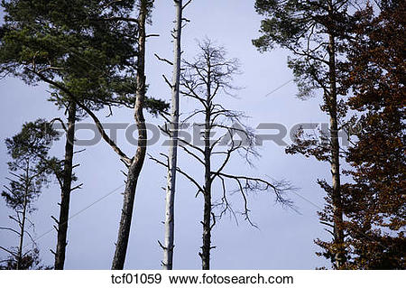Stock Photograph of Germany, Bavaria, Forest dieback, Common.