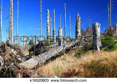 Stock Photo of Forest dieback k16520803.