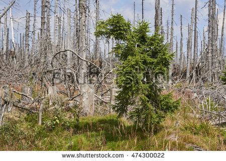National Mountain Park Wildwood Stock Photos, Royalty.