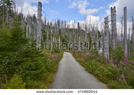 Rain Forest Stock Images, Royalty.