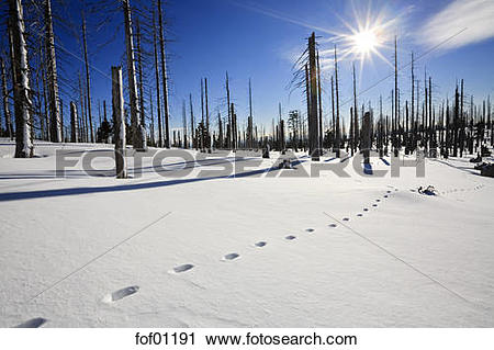 Stock Photography of Germany, Bavarian Forest, Lusen, Snowscape.